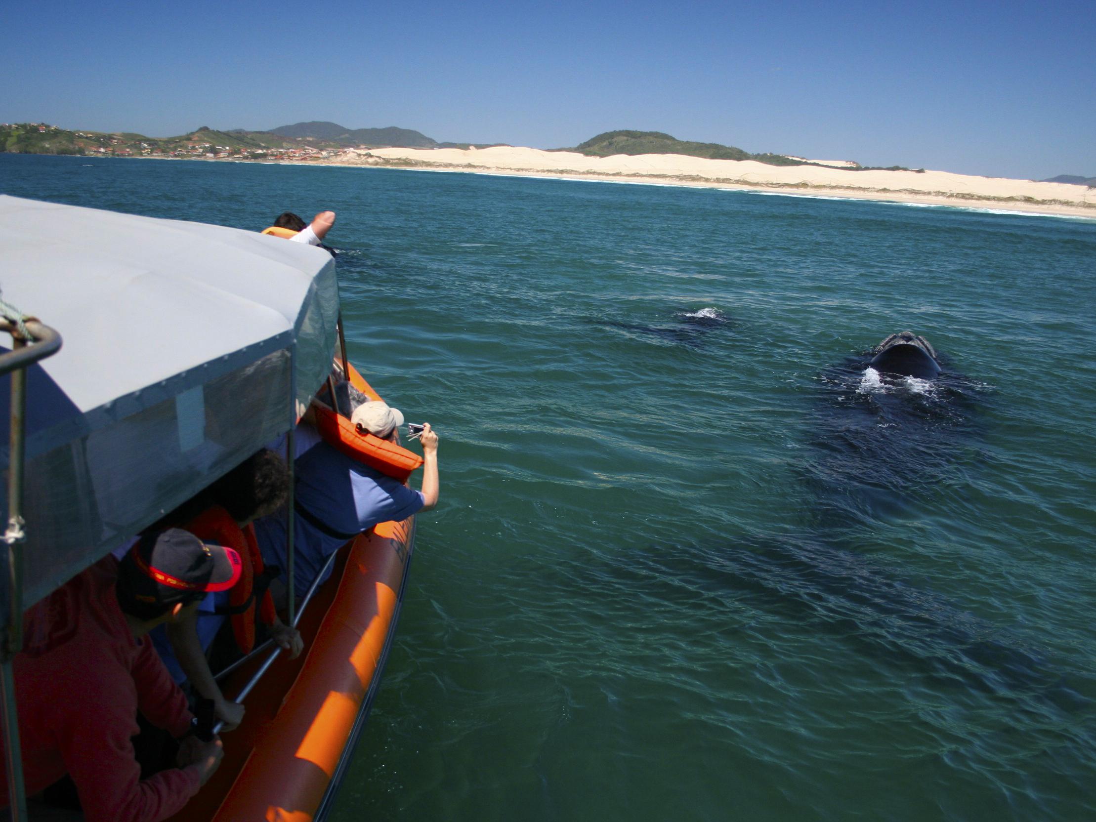 Resultado de imagem para avistagem de baleias no litoral sul de santa catarina